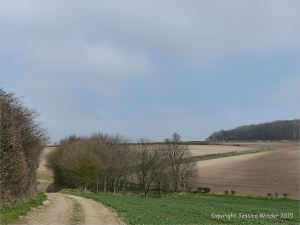 Country view on Charlton Down in March