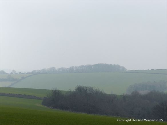 Mist-shrouded fields on Charlton Down in March.