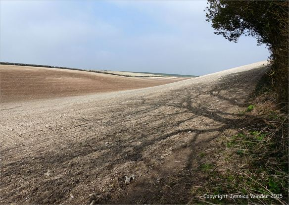 Hedgerow trees casting weak shadows on the pale turned soil of the intersecting slopes around Charlton Down