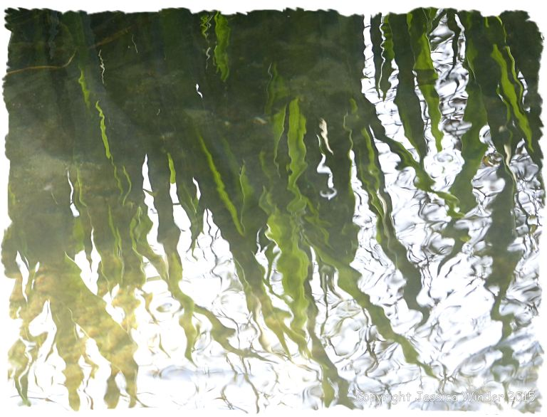 Plants reflected in the rippling water of a small river