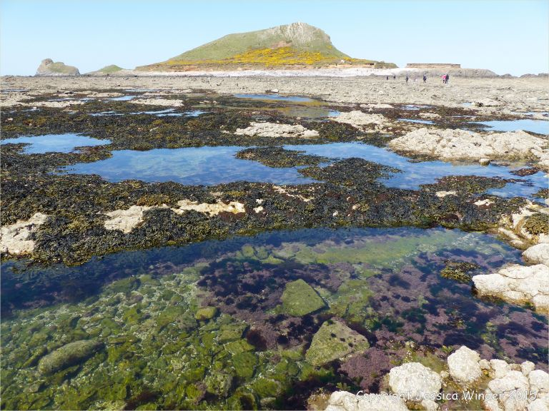 Rock pool on the Worms Head Causeway in Gower, South Wales