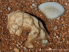 Beach boulders in shingle at the water's edge