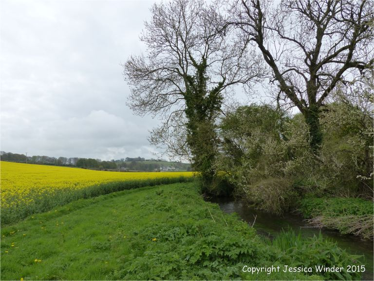 View looking south along the banks of the River Cerne