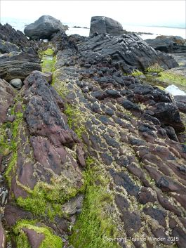 Red sandstone Devonian rocks on the seashore