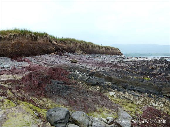 Devonian sandstone rocks on the seashore
