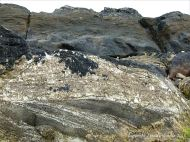 Devonian sandstone rocks on the seashore