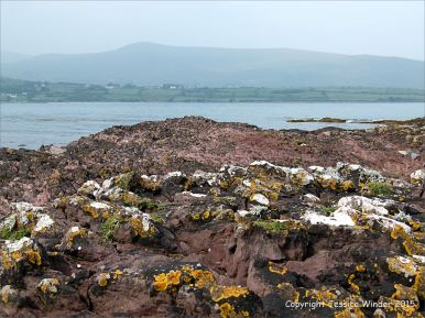 Red sandstone rocks with black, yellow, and white lichens on the seashore