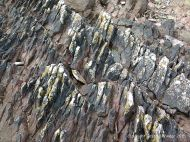 Devonian red sandstone strata with black lichen on the seashore