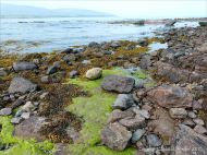 Rocks and seaweed on the beach at Fermoyle