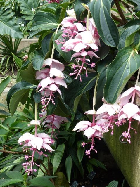 Pink flowers at Kew Gardens