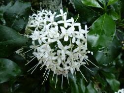White flowers at Kew Gardens