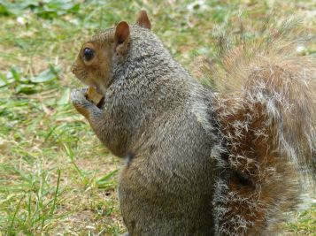 Squirrel at Kew Gardens