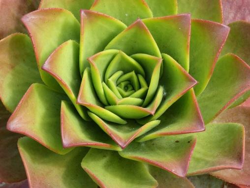 Succulent at Kew Gardens