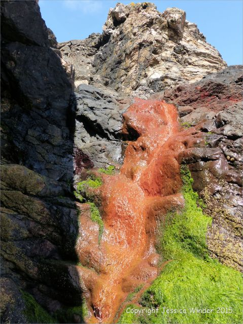 Bright orange deposit from iron-bearing stream cascading down a cliff at Porth Kidney