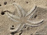 Ghostly shape of a dead starfish in the sand on the beach