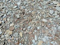 Beach stones near Cape Enrage