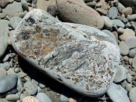 Conglomerate beach stone from near cape Enrage