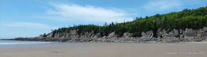 Pine topped cliffs near Cape Enrage