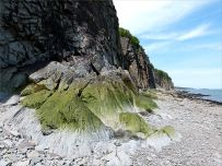 Cliffs and beach outcrops at Cape Enrage
