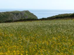 View of Nitten Field looking towards Mewslade Bay