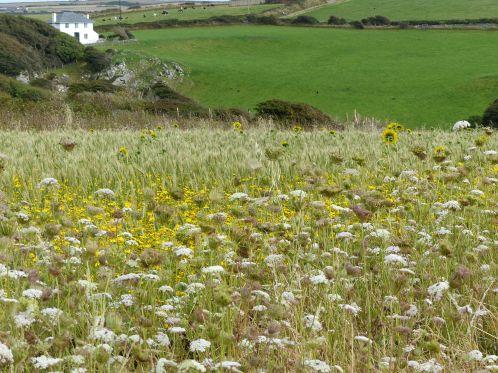 View of Nitten Field, Gower.