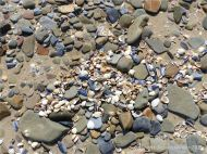 Pebbles and seashells on the beach near Whiteford Point with cockle and mussel shells