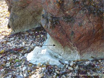 Wave-cut notch at the base of bedrock outcrops in Marble Bay