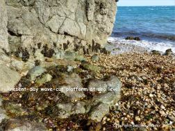 Present day wave-cut platform beneath the pebbles at Marble Bay