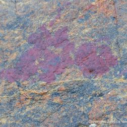 Red bio-film on weathered Icart Gneiss on the beach at Marble Bay