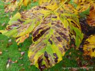 Natural patterns caused by moth caterpillar infestation in leaves