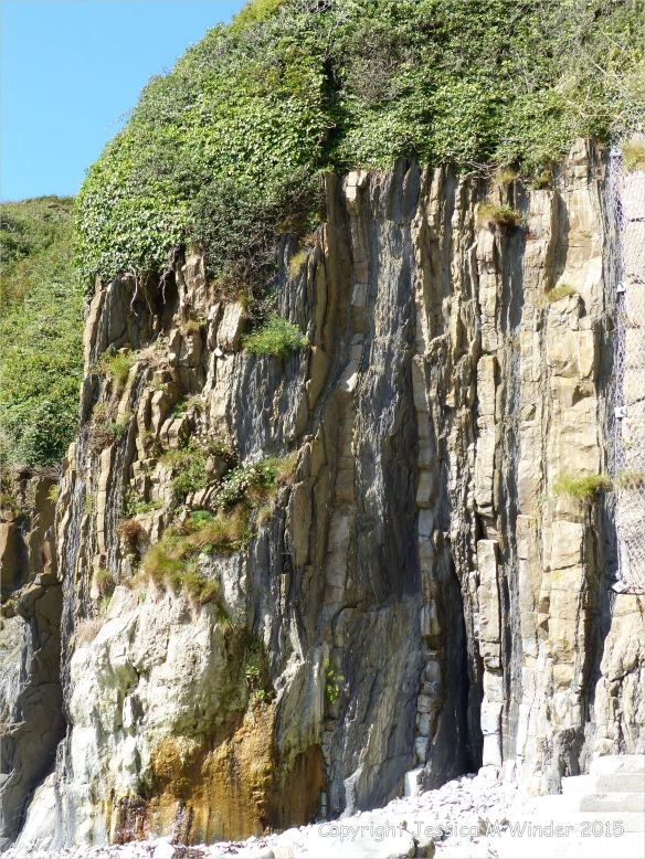 Vertical Carboniferous Avon Group limestone rock strata with shales on the seashore at Church Doors on the South Pembrokeshire Coast in Wales