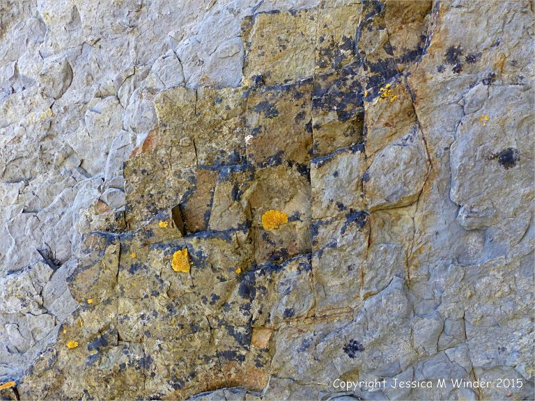 Close-up detail of Carboniferous Avon Group limestone rock strata on the seashore at Church Doors on the South Pembrokeshire Coast in Wales