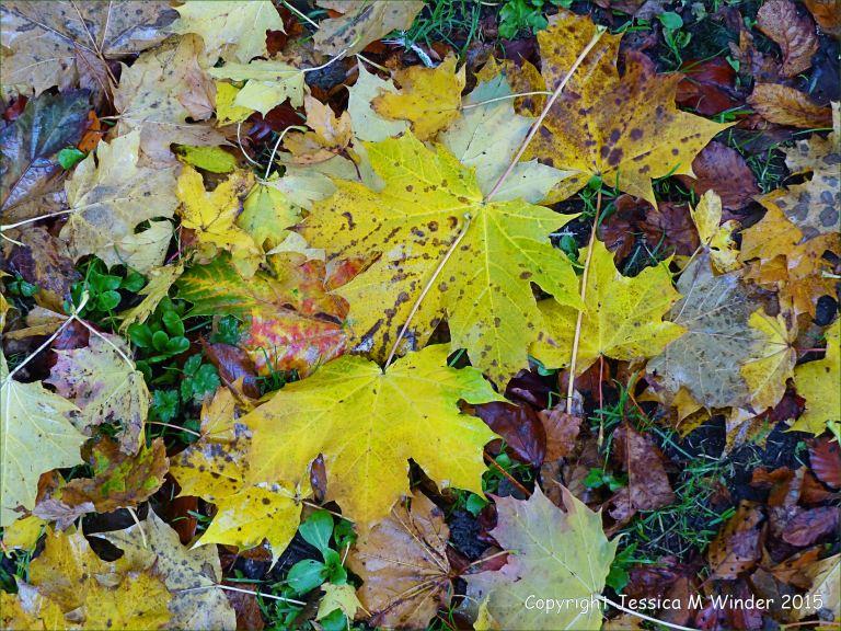 Colourful autumn leaves