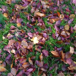 Autumn leaves in Pontypool Park, South Wales