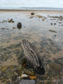 View looking towards Whiteford lighthouse across a beach strewn with stones and old timbers