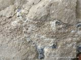 Worm tube fossils in a boulder at Winspit in Dorset