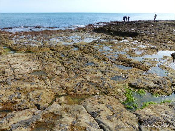Seashore life in shallow rock pools on a limestone ledge