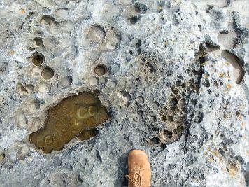 Rock texture in limestone at Doolin