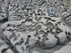 Rock texture in limestone on the seashore