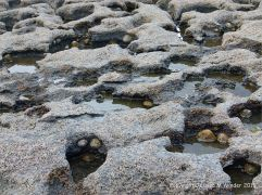 Interconnected small rock pools caused by karstic erosion in limestone