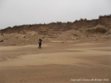 Sand dune erosion on the Welsh coast