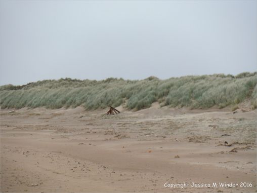 Uneroded low dunes at southwestern part of Whiteford Sands