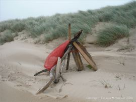 Section of uneroded low sand dunes with flotsam at Whiteford Sands