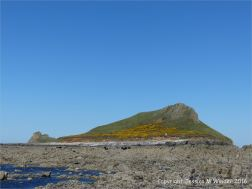 West side of the Inner Head on Worm's Head