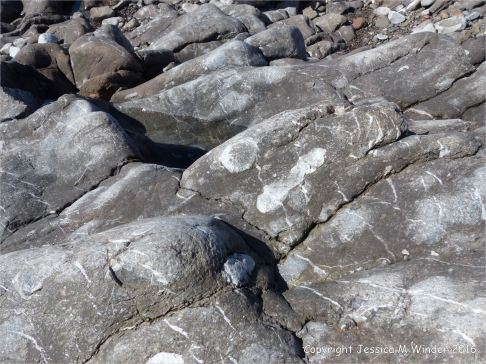 Carboniferous limestone with coral fossils