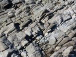 Carboniferous limestone and rock pattern and texture