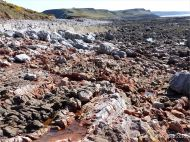 Red haematite in Carboniferous limestone at Worm's Head