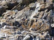 Natural fracture patterns in limestone rocks on the seashore