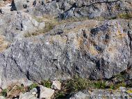 Fossiliferous limestone outcrop