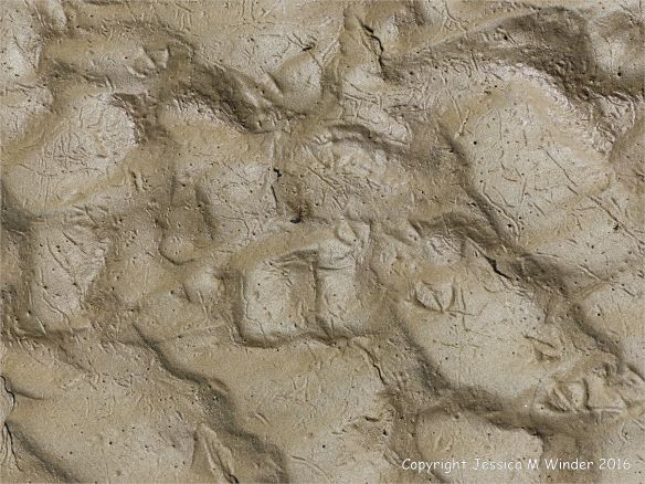 Wet seashore sand ripples with marine invertebrate tracks and traces